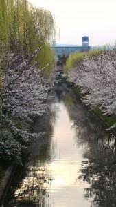 Chushojuima river during Sakura
