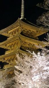 Toji and Sakura by night